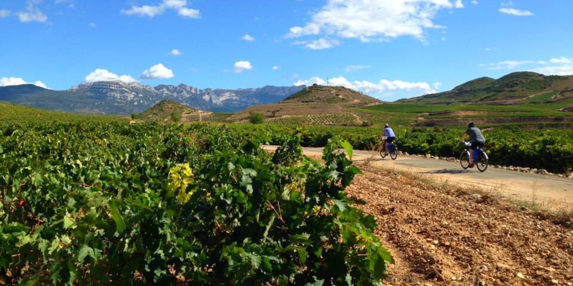 5 Fascinating Facts About The Rioja Wine Region